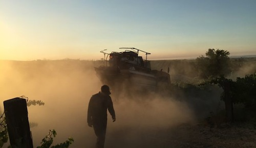 Dust is kicked up during the start of the Washington wine grape harvest.