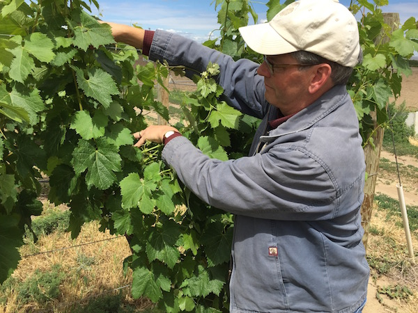 Casey McClellan has been farming grapes in the Walla Walla Valley for more than 30 years. (Photo by Eric Degerman/Great Northwest Wine)