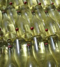 college cellars 2015 muscat bottles feature 120x134 - Walla Walla's College Cellars bottles 2015 Muscat before class starts
