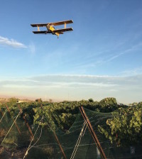 crop duster fraser vineyard 9 24 15 feature 200x224 - Idaho wine industry prepares for 10th annual judging