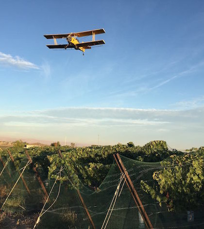 crop duster fraser vineyard 9 24 15 feature 420x470 - Idaho wine industry prepares for 10th annual judging