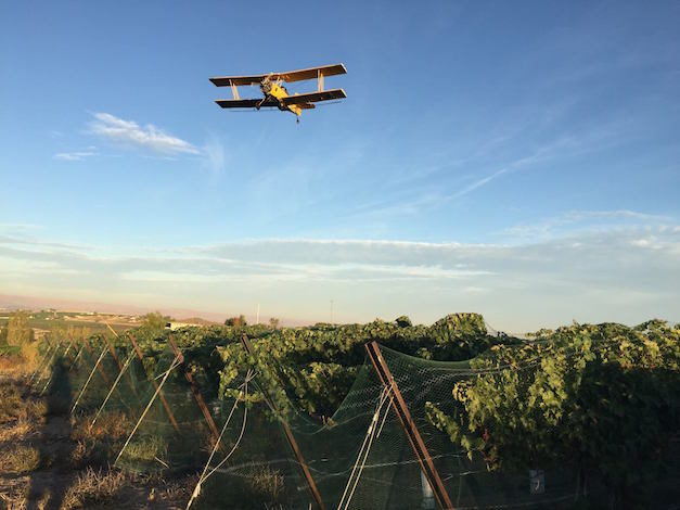 A Snake River Valley crop duster on a morning sortie flies over Fraser Vineyard near Caldwell, Idaho, on Thursday, Sept. 24, 2015. (Photo by Eric Degerman/Great Northwest Wine)