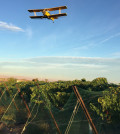 fraser vineyard flyover feature 120x134 - Weather report favors Pacific Northwest wine grape harvest