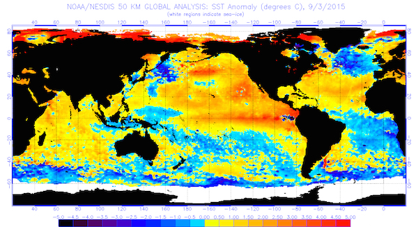 This chart indicates the global sea surface temperatures (°C) for the period ending Sept. 3, 2015 (image from National Oceanic and Atmospheric Administration/National Environmental Satellite, Data and Information Service)