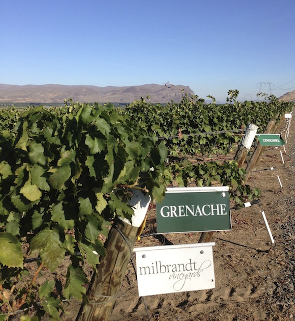 Washington Grenache is grown on the Wahluke Slope.