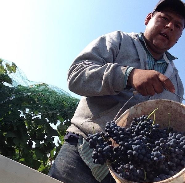 Idaho wine country is growing.
