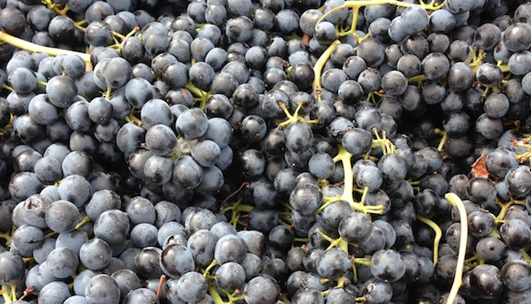Washington Merlot can make a bold and delicious wine.