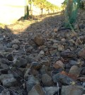 tertulia feature 120x134 - Extreme vineyard pays off for Walla Walla's Tertulia Cellars