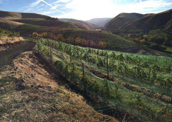 Elevation Vineyard is a terraced vineyard owned by Tertulia Cellars