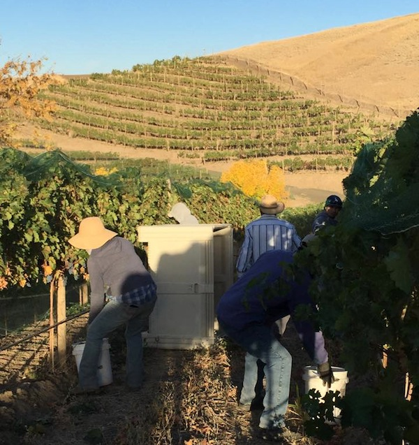 Tertulia Cellars owns Elevation Vineyard in Walla Walla.