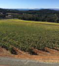 Vines begin to change color Sept. 26, 2015, at Willamette Valley Vineyards in Turner, Ore.