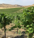 3 horse ranch vineyards feature 120x134 - Idaho wine industry awaits establishment of Eagle Foothills AVA