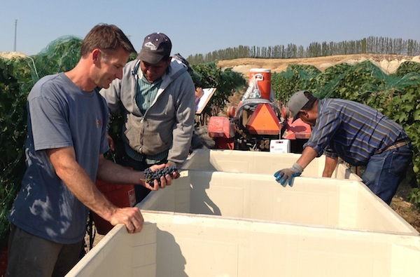 Greg Koenig buys grapes from Williamson Vineyard in Idaho.