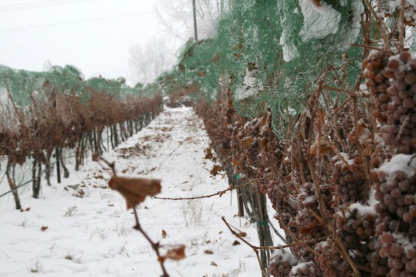Greg Koenig makes ice wine and TBA wines from Riesling grapes.