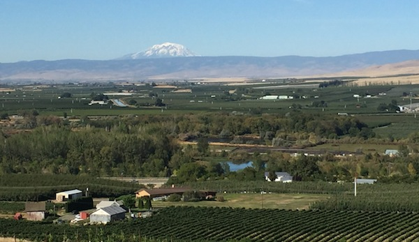 Mount Adams over the Rattlesnake Hills in the Yakima Valley of Washington wine country.
