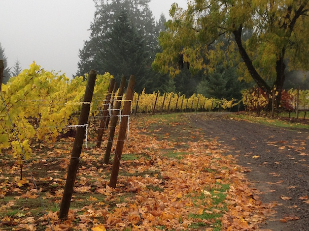 Styring Vineyards in Newberg, Ore., prepares for the post-harvest transition from autumn to winter.