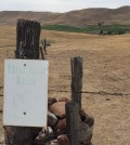 3 horse ranch vineyard pasture feature 120x134 - TTB establishes Eagle Foothills AVA for Idaho wine industry