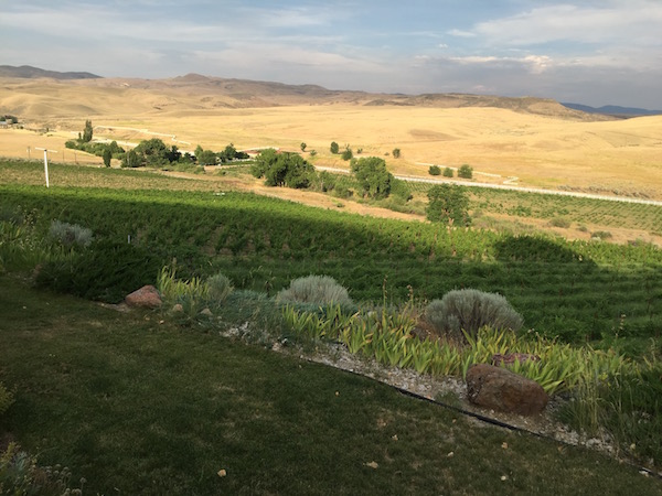3-horse-ranch-vineyard-sunset-great-northwest-wine