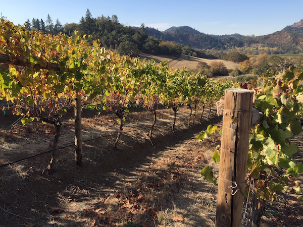 Grapes from the 2015 vintage are off the vines and going through fermentation by Oct. 15 at Abacela in Roseburg, Ore.