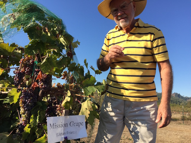 Earl Jones, founding winemaker and co-owner of Abacela in Roseburg, Ore., stands next to his Listán Prieto vines. Abacela recently learned the identify of the vines, which they believe were planted by the homesteading Cox family in 1873. (Photo by Eric Degerman/Great Northwest Wine)