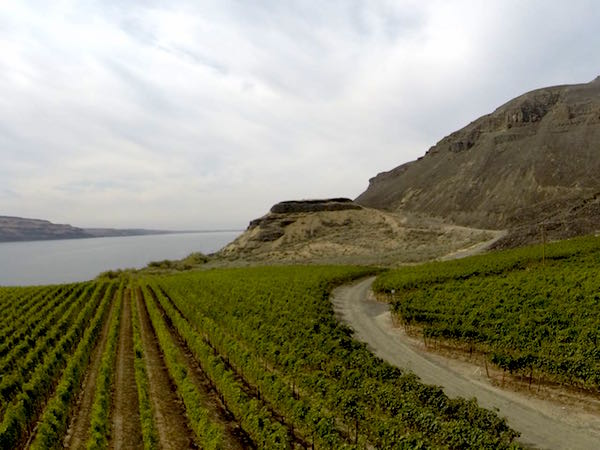 The Benches Vineyard.
