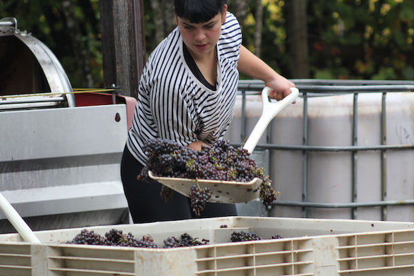 Phaedra Brucato is the wine steward at the Willows Inn on Lummi Island.