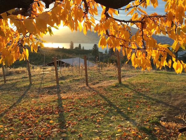 Bella Sparkling wines makes British Columbia sparkling wine.