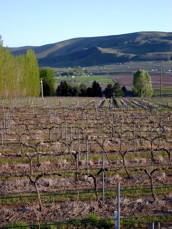 Buoy Vineyard in Benton City, Wash., is managed by Bob Buoy. The Yakima Valley site is the primary source of fruit for Sleeping Dog Wines. (Photo courtesy of Sleeping Dog Wines)