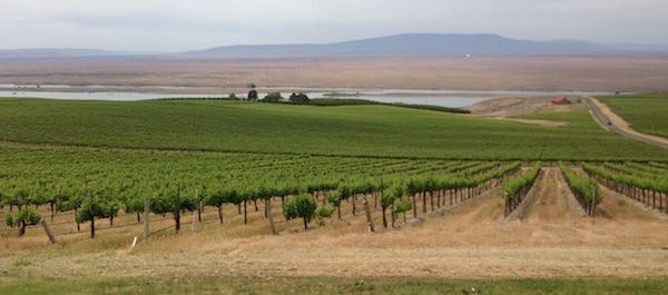 Dionysus Vineyard is part of the Sagemoor Vineyards group. It is near the Columbia River.
