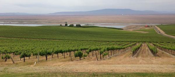 Dionysus Vineyard is part of the Sagemoor Vineyards group. It is near the Columbia River.