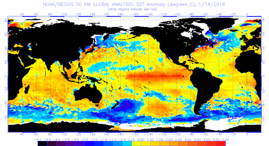 Global sea surface temperatures (°C) for the period ending Jan. 14, 2016 (Image from National Oceanic and Atmospheric Administration (NOAA) and National Environmental Satellite, Data, and Information Service (NESDIS).