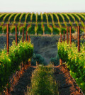 double canyon vineyard feature 120x134 - Wine lovers have abundance of educational opportunities