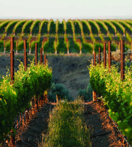double-canyon-vineyard-feature