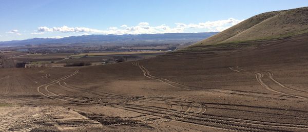 The Koenig brothers are poise to plant J Victor Vineyard, a 32-acre project on Idaho's Sunnyslope, for Boise businessman Jay Hawkins.