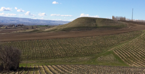 J Victor Vineyard, which overlooks the Snake River Valley, will be a 32-acre planting of red varieties. In the foreground is Symms Vineyard, one of the oldest plantings in Idaho.
