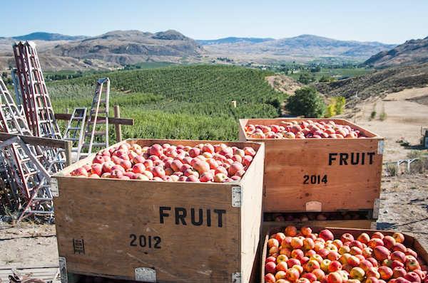 Washington apple commission.