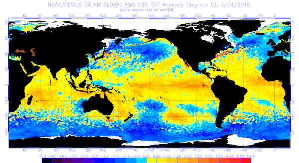 This chart indicates the global sea surface temperatures (°C) for the period ending March 24, 2016 (Image from National Oceanic and Atmospheric Administration/National Environmental Satellite, Data and Information Service)