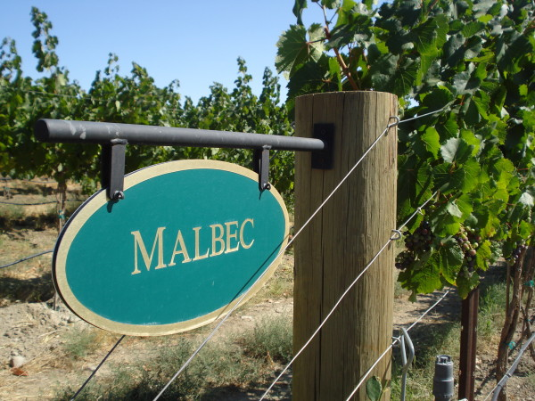 Washington Malbec is coming on strong.