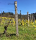 a-to-z-wineworks-juniper-fence-post-feature