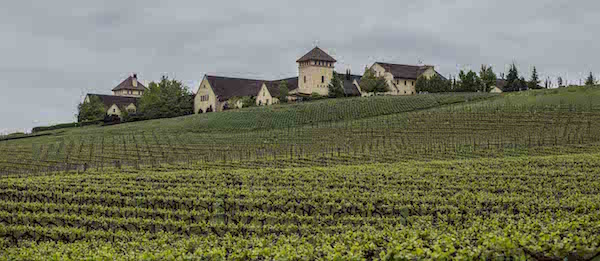 King Estate hopes to earn Demeter certification for its 465 acres of vineyard, a recognition that would make it the largest such vineyard in the U.S. and among the biggest in the world. (Photo courtesy of King Estate)