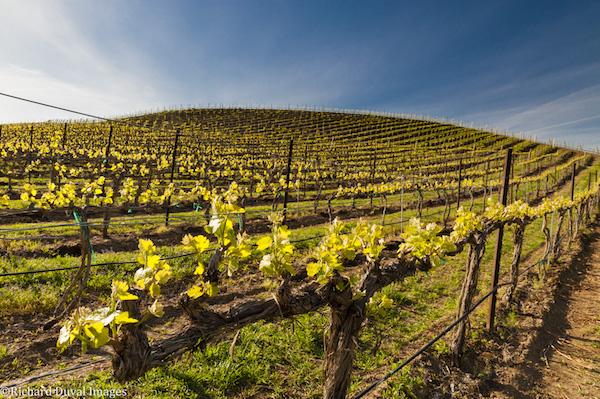 Washington wine grape growers