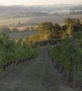 amity vineyard ryan harms 2014 feature 120x134 - Brilliance of Oregon Pinot Noir