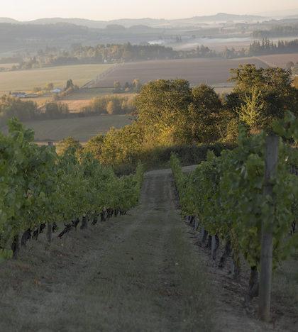 amity-vineyard-ryan-harms-2014-feature