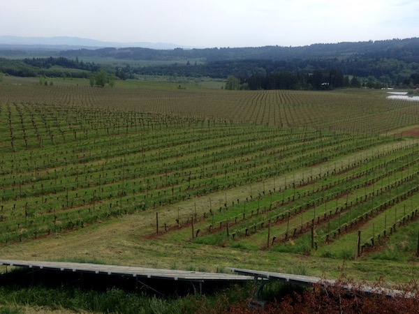 Bethel Heights Vineyard in the Eola-Amity Hills near Salem, Ore., has been viewed as a pioneer for sustainable agriculture, including the use Western juniper and solar energy. (Photo by Eric Degerman/Great Northwest Wine)