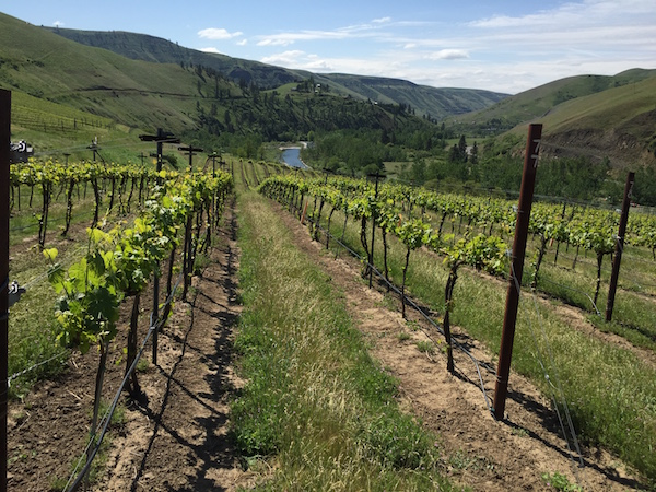 Colter's Creek Vineyard, an estate planting for owners Mike Pearson and Melissa Sanborn in the newly established Lewis-Clark Valley American Viticultural Area, basks in the warmth of spring near Juliaetta, Idaho.