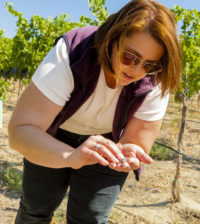 Hilary Sjolund samples Red Mountain grapes in preparation for harvest. (Photo by Richard Duval)