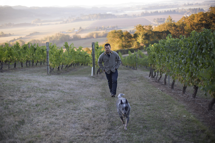 Ryan Harms and his blue heeler, Jake, walk the rows at historic Amity Vineyard. Harms and Union Wine Co., purchased the property and the brand from Oregon iconoclast Myron Redford in spring 2014.