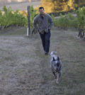 ryan-harms-amity-vineyards-dog-feature