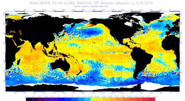 This chart indicates the global sea surface temperatures (°C) for the period ending May 5, 2016 (Image from National Oceanic and Atmospheric Administration/National Environmental Satellite, Data and Information Service)