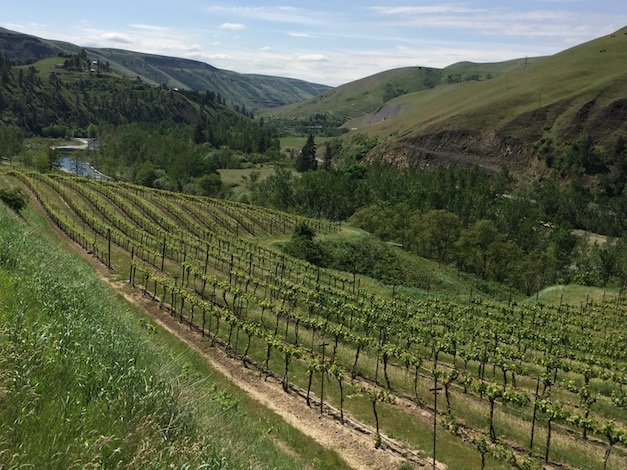 Cabernet Franc and other grape varieties thrive at Colter's Creek Vineyards, which spans 35 acres across two sites — including this planting near the Potlatch River in Idaho.